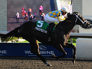 Prospective wins the Grey Stakes.