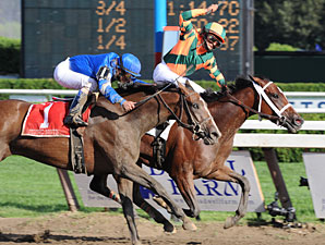 Proud Spell Eyes Big Purse in Cotillion