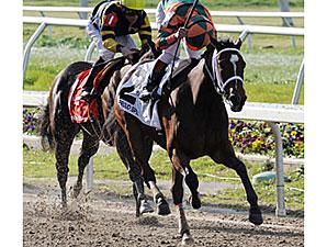 Proud Spell winning the Fair Grounds Oaks (gr. II)