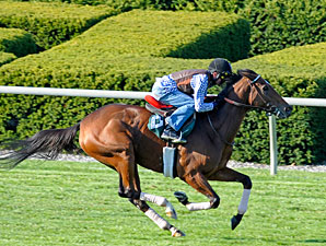 Proviso in BC Mile Tune-up at Keeneland