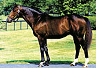 Claiborne Farm Announces 2009 Stud Fees