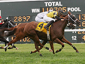 Quality Lass wins the Turf Amazon.