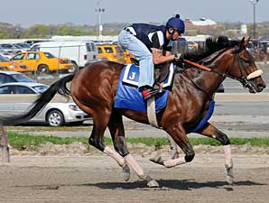 Quality Road gallops at Belmont Park on April 26
