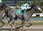 Quantum Miss Rebounds in Cicada