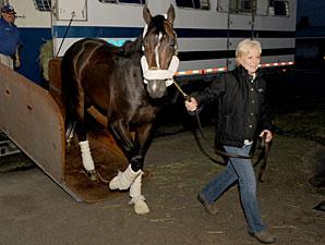 Queen'splatekitten arrives at Woodbine on June 24, 2011.