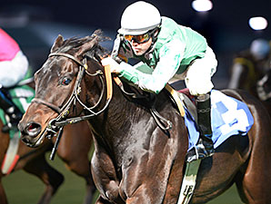 Quiet Acceleration wins the 2014 Richard King Stakes.