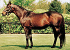 Darley Sire Quiet American Pensioned