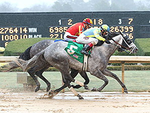 Race Day Shows Grit, Takes Razorback Handicap