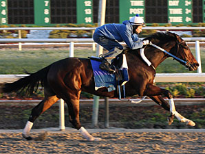 Rachel, Zenyatta Work Toward 2010 Debuts
