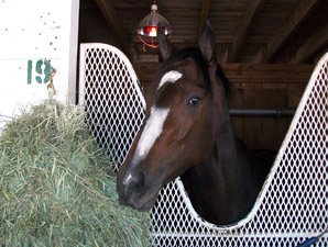 Rachel Alexandra Back at Churchill Downs