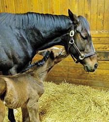 Rachel Alexandra, Foal Taken to Vet Facility