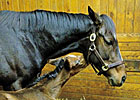 Rachel Alexandra, Foal Taken to Vet Facility