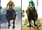 The Race for Horse of the Year
