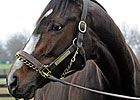 Rachel Alexandra In Foal to Bernardini