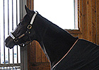 Rachel Alexandra Returns to Stonestreet