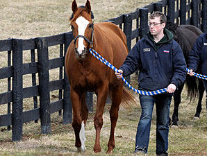 Champion Rags to Riches' First Foal