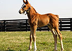 &#39;Rags&#39; Filly Taking After Her Mother