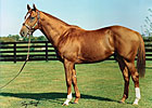 Pensioned Sire Rahy Dies at Three Chimneys