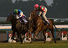 Rainbow Dahlia Defeats Verxina in QE II Cup