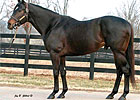 Rainmaker Sires First Winner