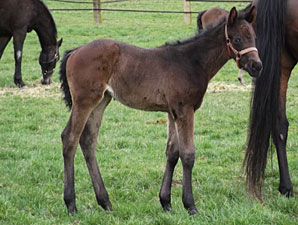 Rallying Cry's First Foal Is a Filly