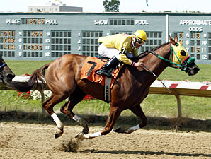 Rapid Redux wins 15 races in a row, 8/22/2011.