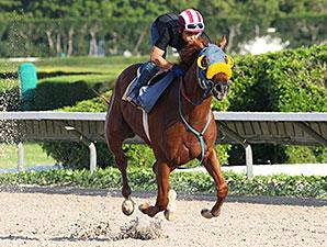 Ravelo's Boy - Calder, June 3, 2012.