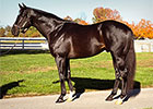 Sire Ready's Image to Calumet Farm