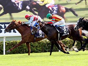 Red Cadeaux wins the Hong Kong Vase.