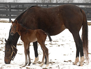 Red Giant's First Foal a Filly