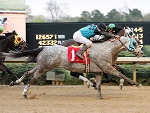 Red Hot N Gold wins the 2009 Hot Springs (deadheat with Silver Edition).