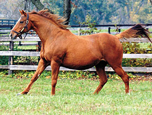 Regal State, Dam of Pleasantly Perfect, Dies