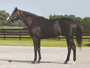 Repent Colt Sizzles in Midlantic Show