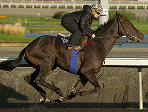 Reporting Star works at Woodbine 10/14/2014.