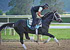 Pletcher to Saddle Record Five Belmont Horses