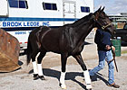 Revolutionary Arrives at Churchill Downs