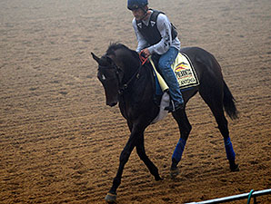 New Arrivals Stretch Legs at Pimlico