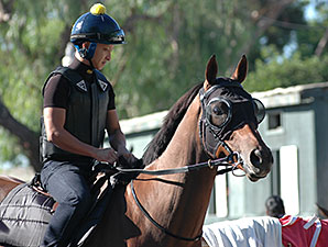 Rich Tapestry prepares for the Santa Anita Sprint.