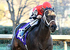 Ride On Curlin Returns in Thanksgiving 'Cap