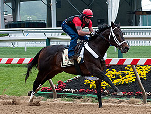 Ride On Curlin works at Pimlico on May 14, 2014.