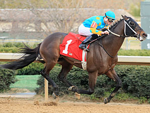 Riley Tuckey wins the 2012 King Cotton Stakes.