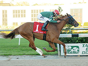 Ring Weekend Returns in Sir Cat at Saratoga