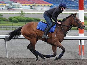 Roan Inish at Woodbine on June 10, 2010.