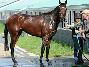 Roan Inish at Woodbine on June 11, 2010.