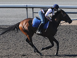 Roan Inish at Woodbine on July 3, 2010.