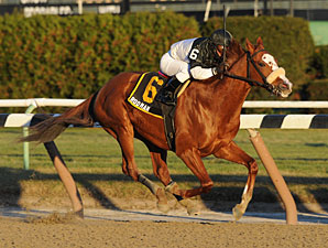 Graded Stakes Winner Rodman Retired