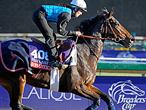 Romantica - 2013 Breeders' Cup, October 30, 2013.