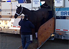 Royal Delta Arrives at Santa Anita