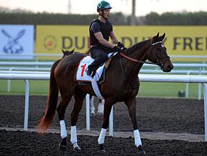 Royal Delta - Dubai, March 27, 2013.