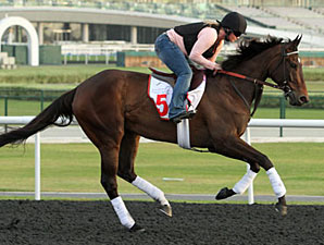Royal Delta preps for racing in Dubai.